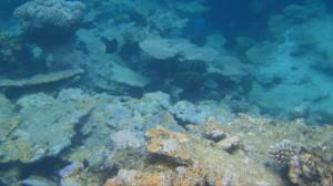 coraux 3