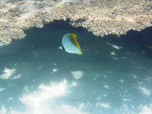 sous l'eau redim1
