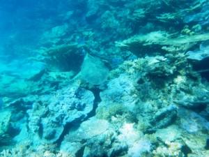 sous l'eau redim10