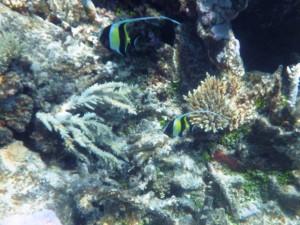 sous l'eau redim11