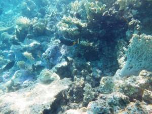 sous l'eau redim12