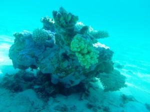 sous l'eau redim13