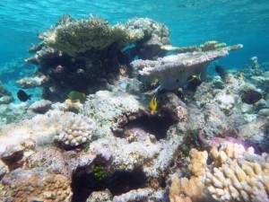 sous l'eau redim15