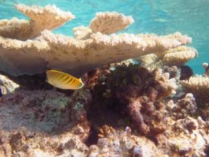 sous l'eau redim17
