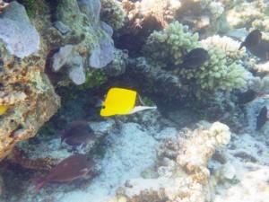 sous l'eau redim18