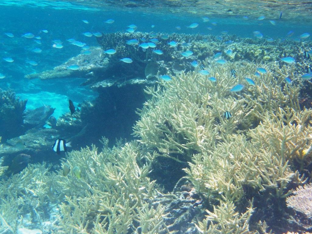 sous l'eau redim2