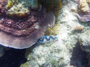 sous l'eau redim4