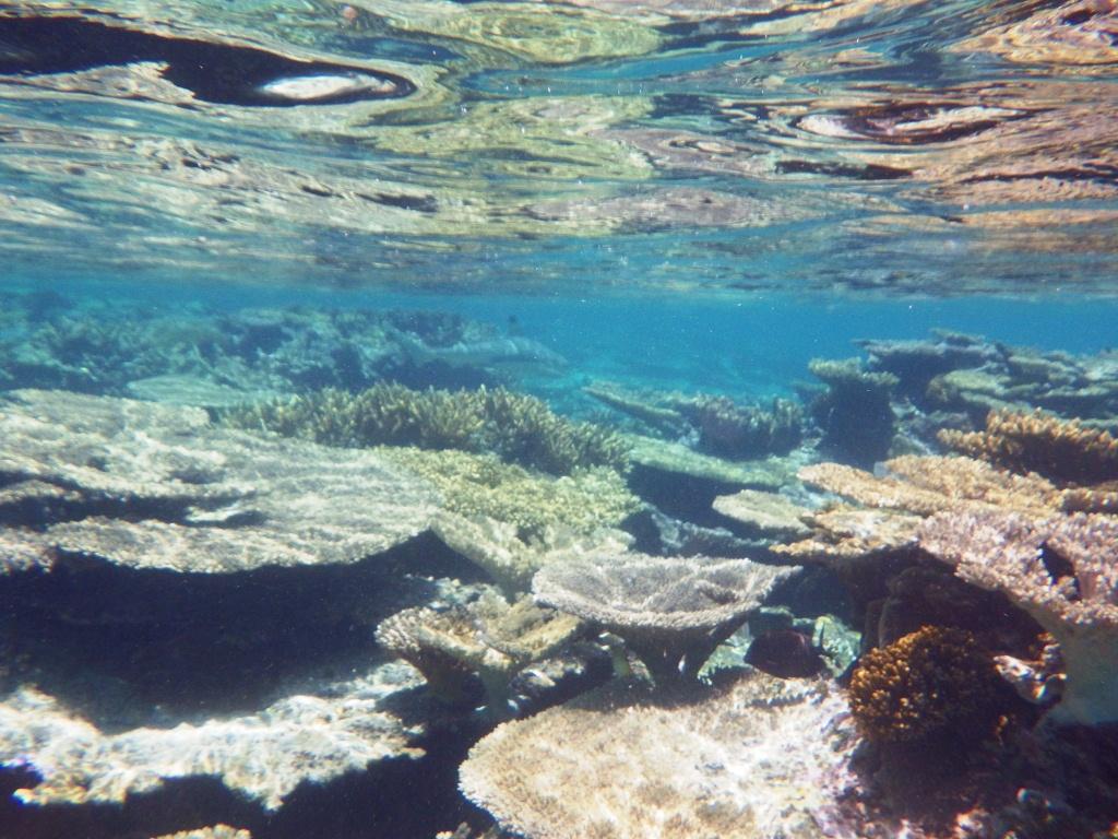 sous l'eau redim6