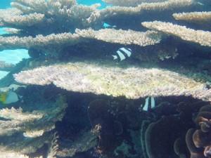 sous l'eau redim8